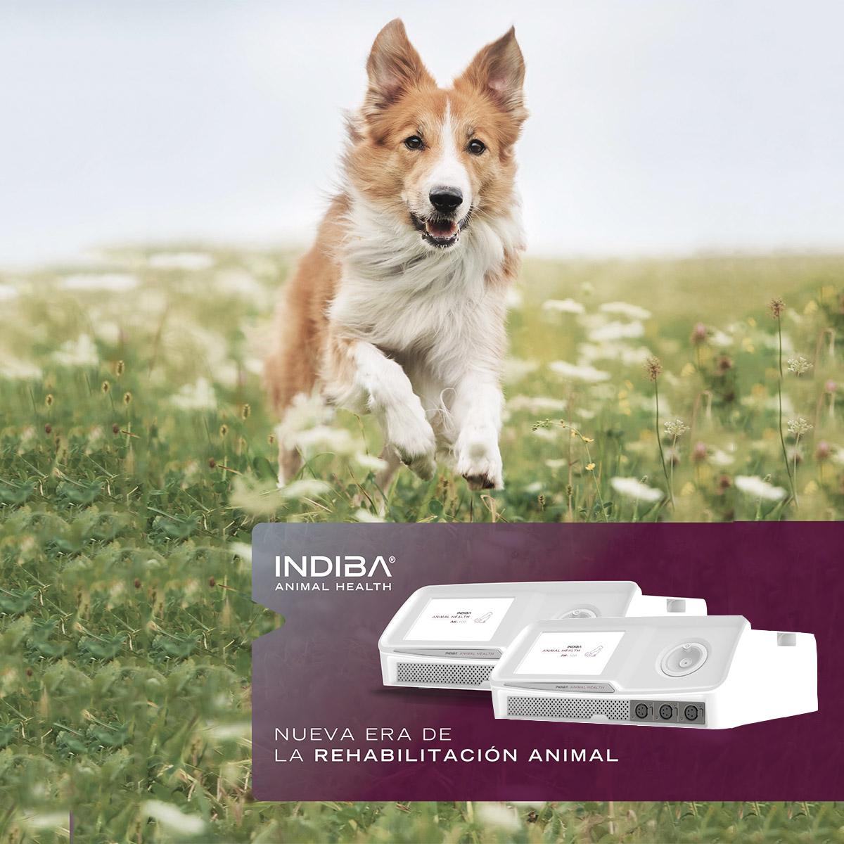 Indiba Animal Health